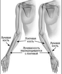 Перелом лучевой кости реабилитация