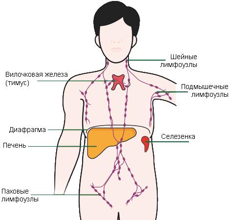 Лечение лимфоузлов в паху у мужчин в домашних условиях