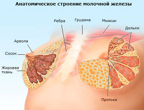 Опухло под мышкой у беременной