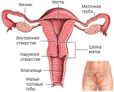 posle-orgazma-bolit-pod-pupok